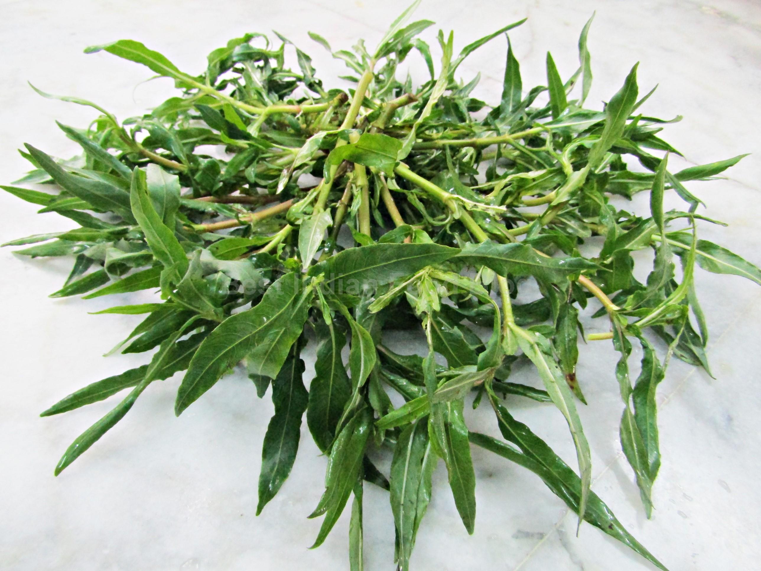 Indian Swampweed