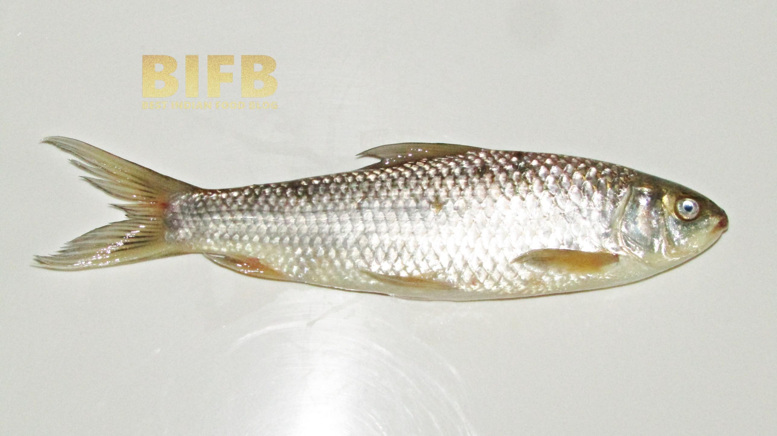 Labeo Bata Fish
