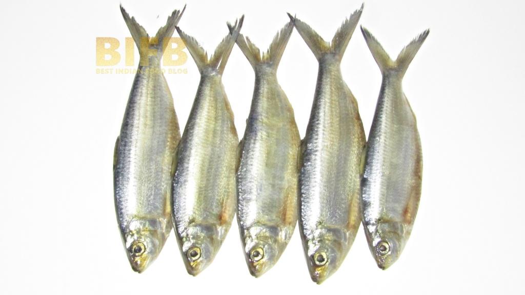 Khoyra Fish